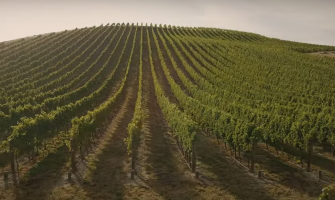 Misha's Vineyard Wines